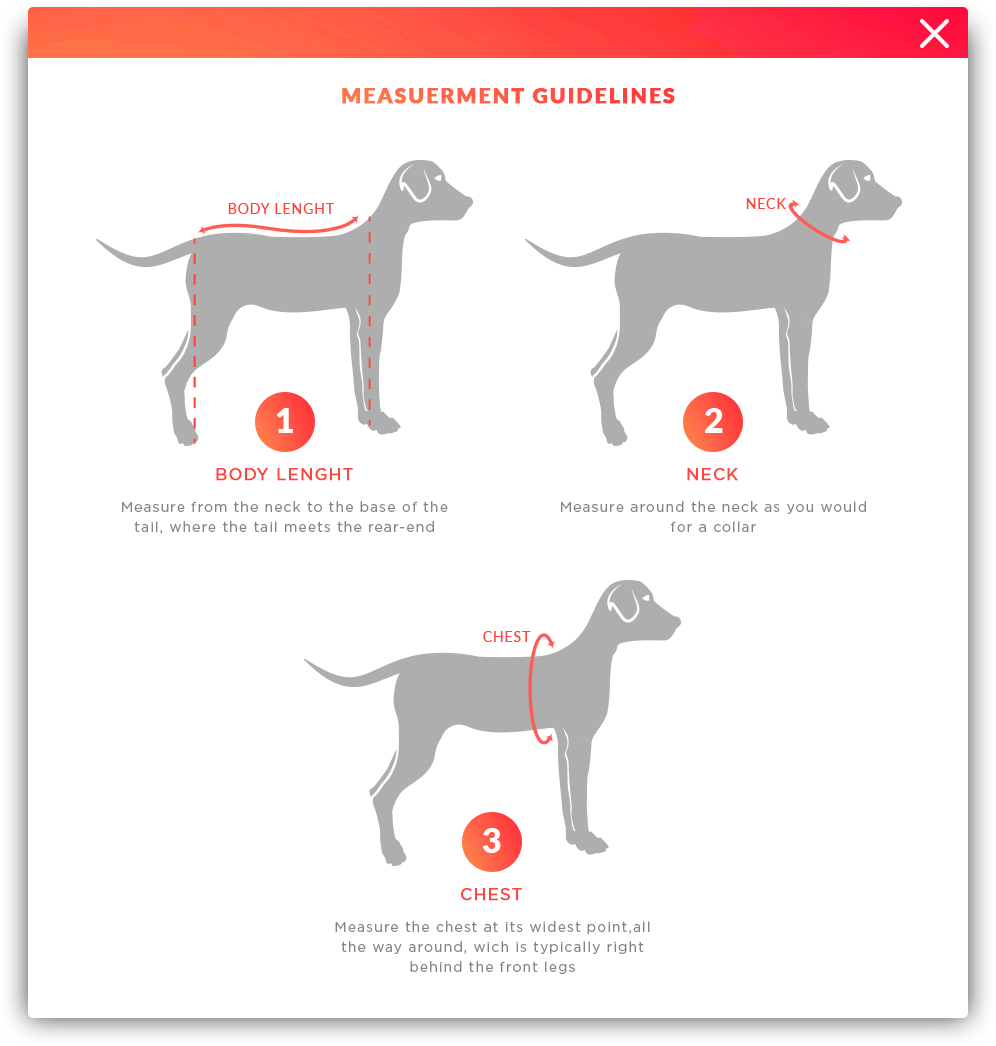 How to measure your dog?