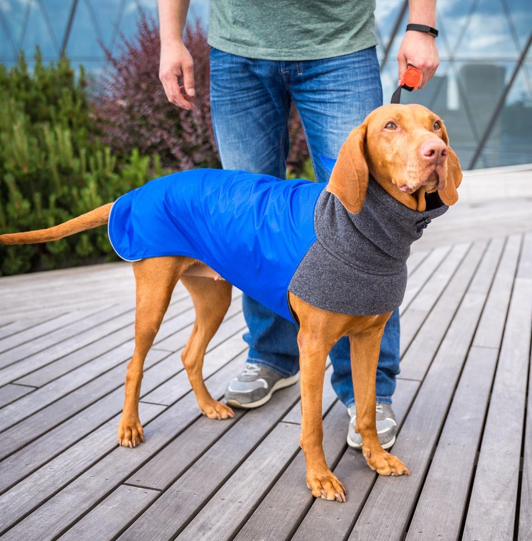 Dog Coats Vizslatea