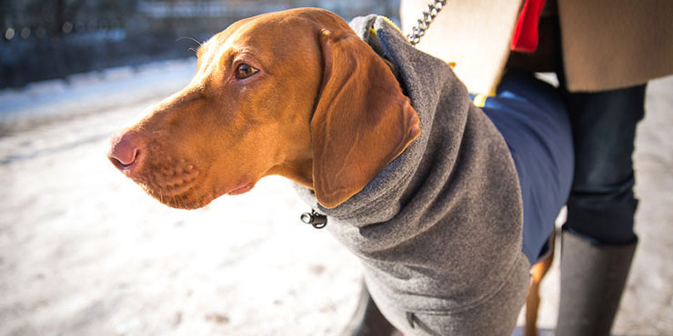 Fleece Dog Sweater